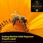 Propolis Lebah ? Segudang Manfaat